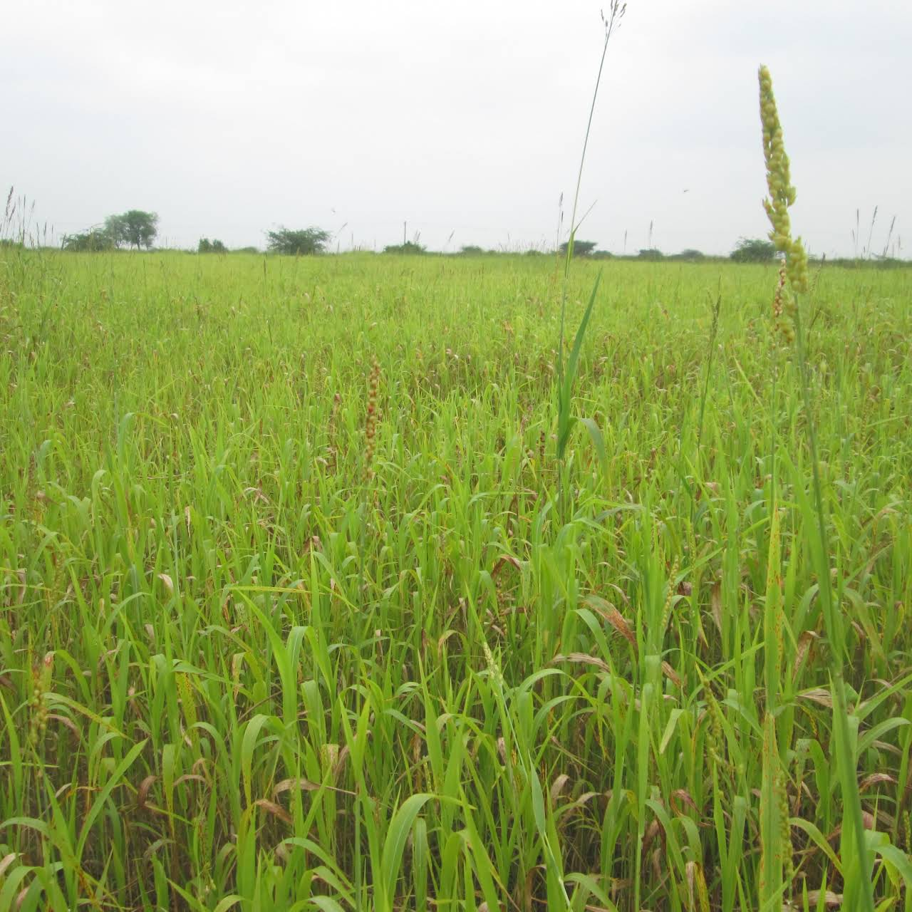 Agriculture Land for Sales - Tirunelveli - 1 Acre,5 Acres,10