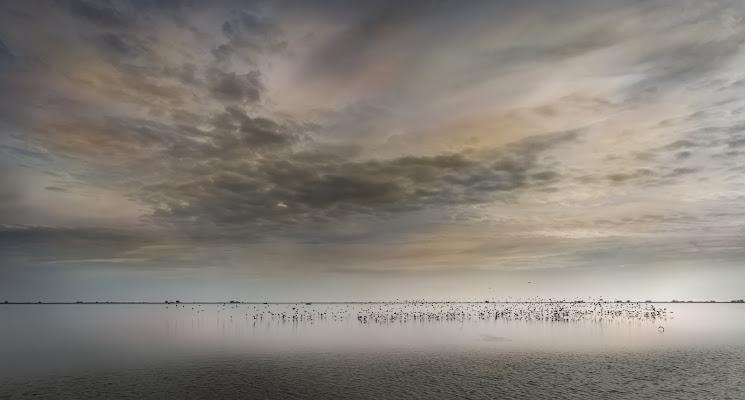 Il grande fiume di aliscaforotto