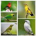 1000 Kicau Burung Lengkap icon