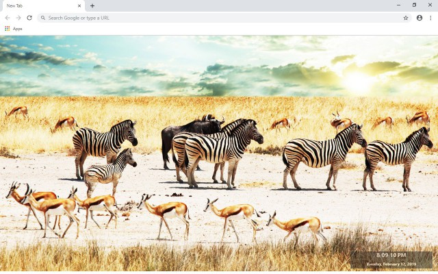 Zebra New Tab & Wallpapers Collection