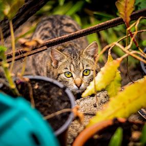 by Baltă Mihai - Animals - Cats Kittens