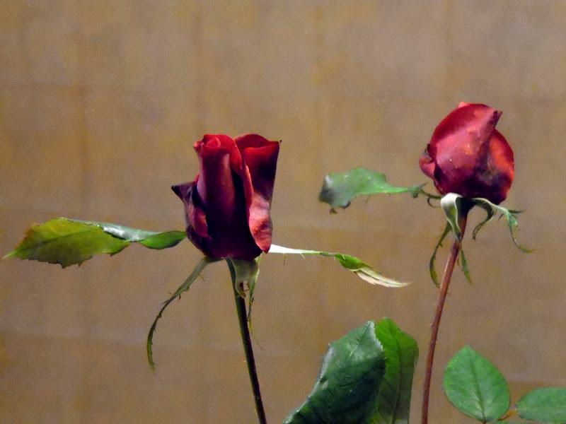 Rosa allo specchio di joysphoto
