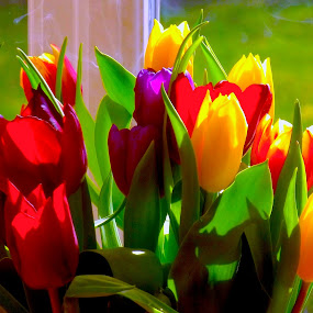 Riot of Colour ...Tulips by Ian Cormack - Nature Up Close Flowers - 2011-2013 ( colour, tulips, flowers )