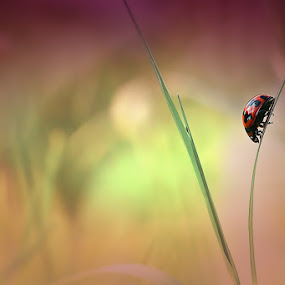 leave me alone  by Angga Putra - Animals Insects & Spiders