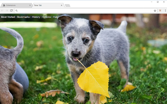 Dogs & Puppies Wallpapers Dog Puppy New Tab
