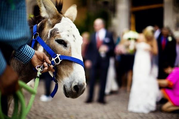 Fotógrafo de bodas Jesse Samaniego (JesseSamaniego). Foto del 28.11.2016