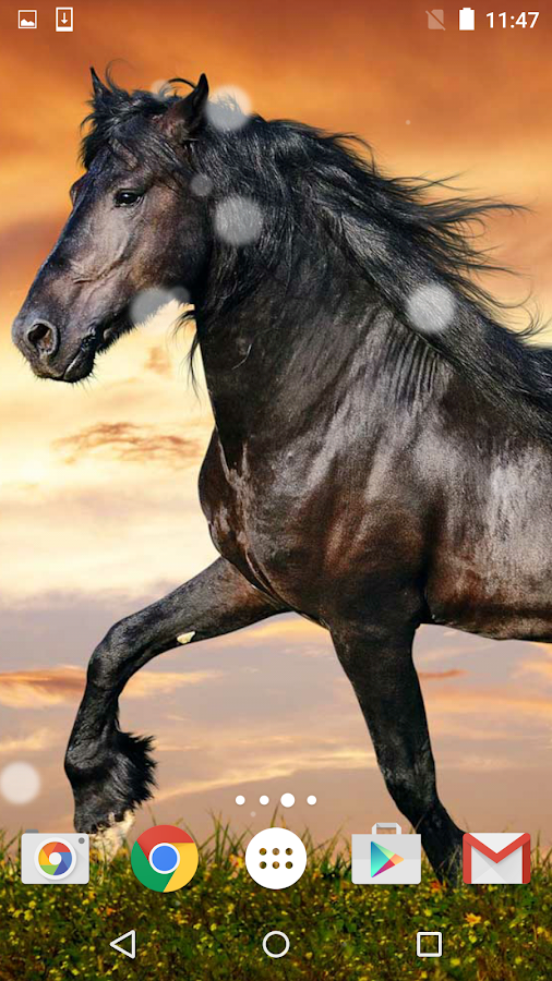 horses live wallpaper hd android apps on google play