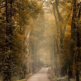 CC-ParkRoad by Chris Thomas - Landscapes Forests ( tn, vacation, family, gatlinburg, cades cove, gatlinberg )