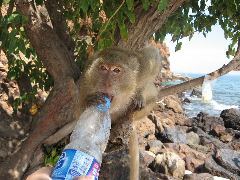 Как проводить время в Паттайе. Остров Ко Лан
