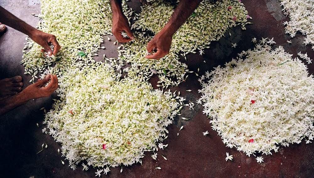Mitti attar, o perfume indiano que cheira a chuva