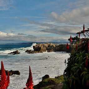 Pacific Grove Coastline by John Canning - Landscapes Waterscapes
