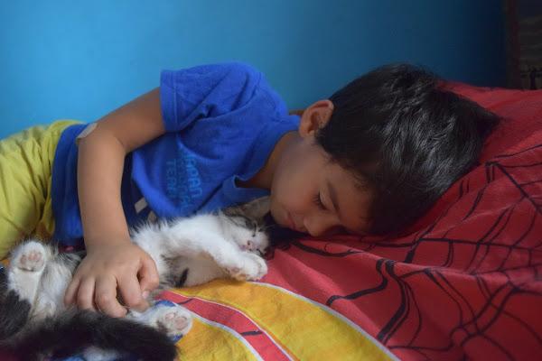 il sonno dei cuccioli di samui