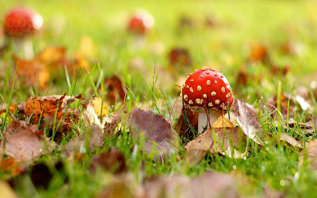 Mushroom - New Tab in HD