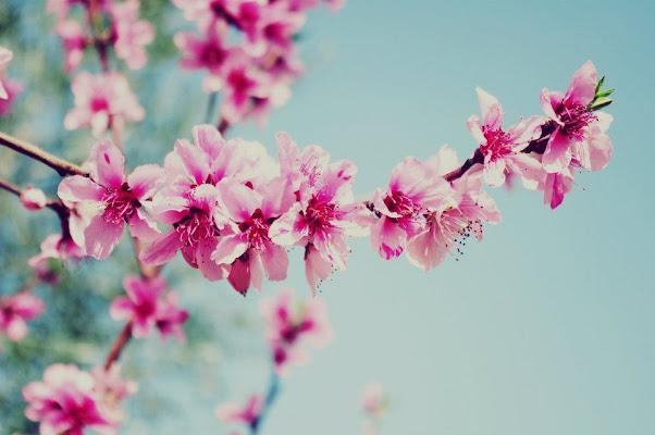 Primavera.  di micphotography