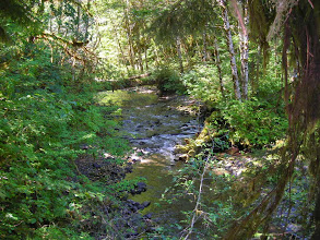 Photo: Along the walk to Marymere Falls in Olympic National Park.