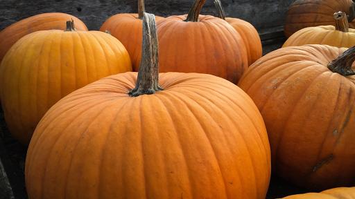 16/10/19 courges paniers de Béatrice, alimentation de détail et diététique Ardèche Vallée du Rhône