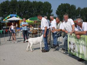 Photo: Klasse 2: witte lammeren geboren in januari 2013.  1a. Nooro's Femke 43.