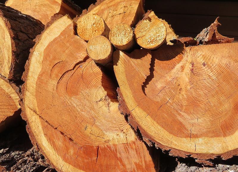 Tree Circles di Laucol