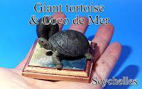 Giant tortoise & Coco de Mer -Seychelles-