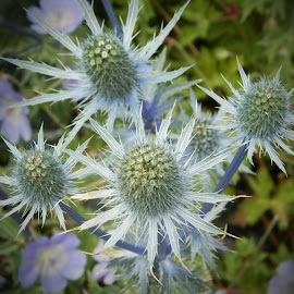 by Rebecca Pollard - Flowers Flowers in the Wild (  )