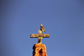 Photo: carpi andino sobre cruz del campanario