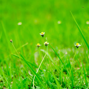 Small world by Papin Michael - Novices Only Flowers & Plants ( plant, grass, green, small flower, small, flower )