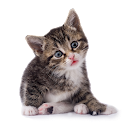 StickerCats icon