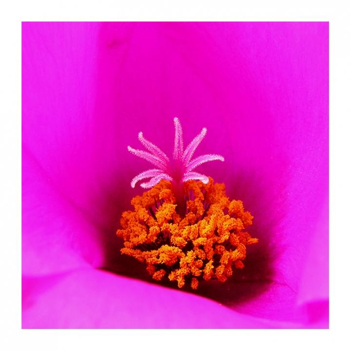Il Fiore...Nel Fiore di InsolitiScatti-di-CarloSoro