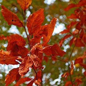 by Bojan Rekic - Nature Up Close Leaves & Grasses