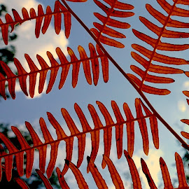 Geometry by Philippe Smith-Smith - Nature Up Close Other plants ( forêt, plante, light, fougère, geometry )