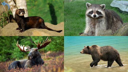 Kids Learn About Animals  screenshots 14