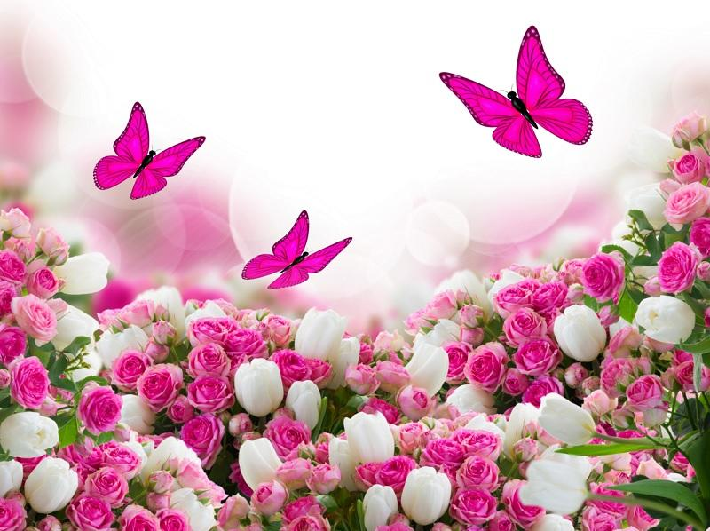 Butterfly Wallpapers for Chat Android Apps on Google Play