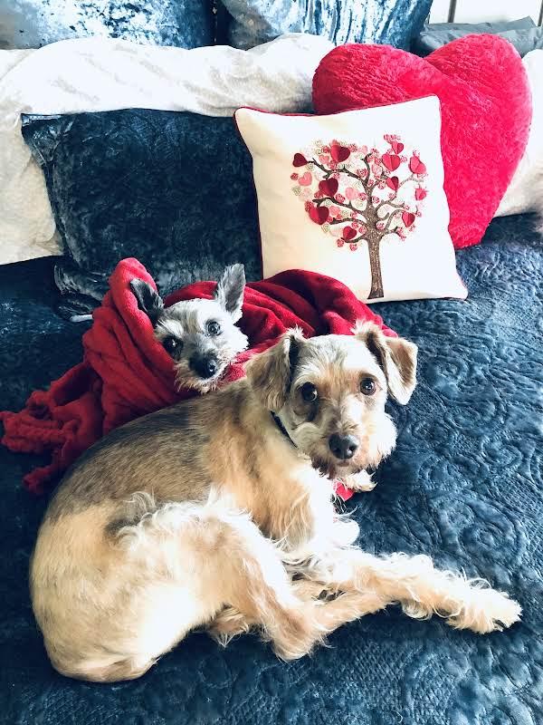 Paczki & His Sister Miss Tibby