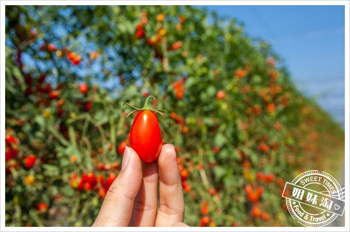 美濃澄蜜香玉女小番茄甜度爆表