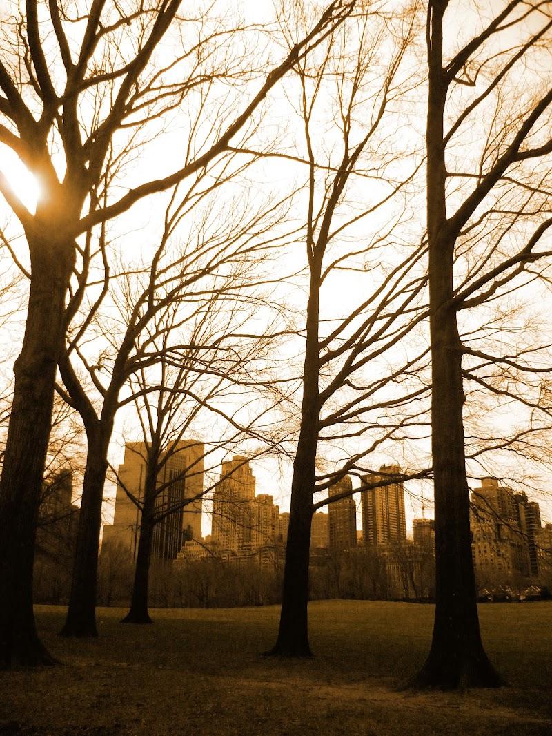 Central Park, NY di Jo_74