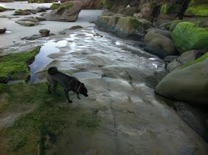 Photo: Malia exploring the beaches in La Jolla, CA
