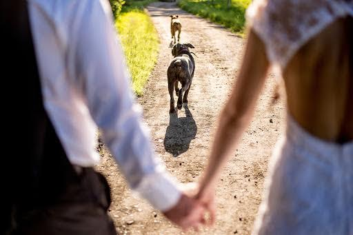 Wedding photographer Petr Wagenknecht (wagenknecht). Photo of 23.11.2014