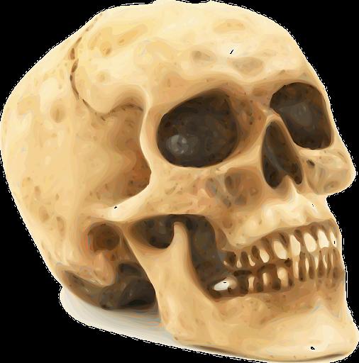 頭蓋骨と頭蓋骨の壁紙