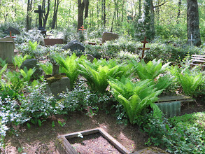 Photo: Note all the ferns