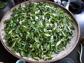Photo: 茶藝