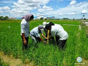 Photo: Experiment preparations - CFPAR for Kampot province farmers , Lvea Village, Ang Popel commune, Korng Pisey district, Kampong speu province (21 Aug 2014)