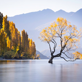 Wanaka 1 by Mark Anolak - Landscapes Waterscapes ( fall colors, waterscape, tree, lake, new zealand )