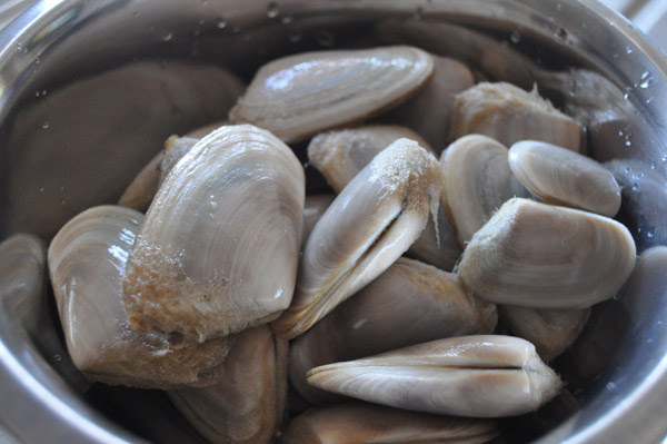Tuatua NZ Clams, tuatua, clams, seafood, shellfish, kai moana, new zealand, Hot Girls Cooking, New Zealand (NZ) Cooking, Cooking for real, 新西兰烹饪,配有照片的食谱教程