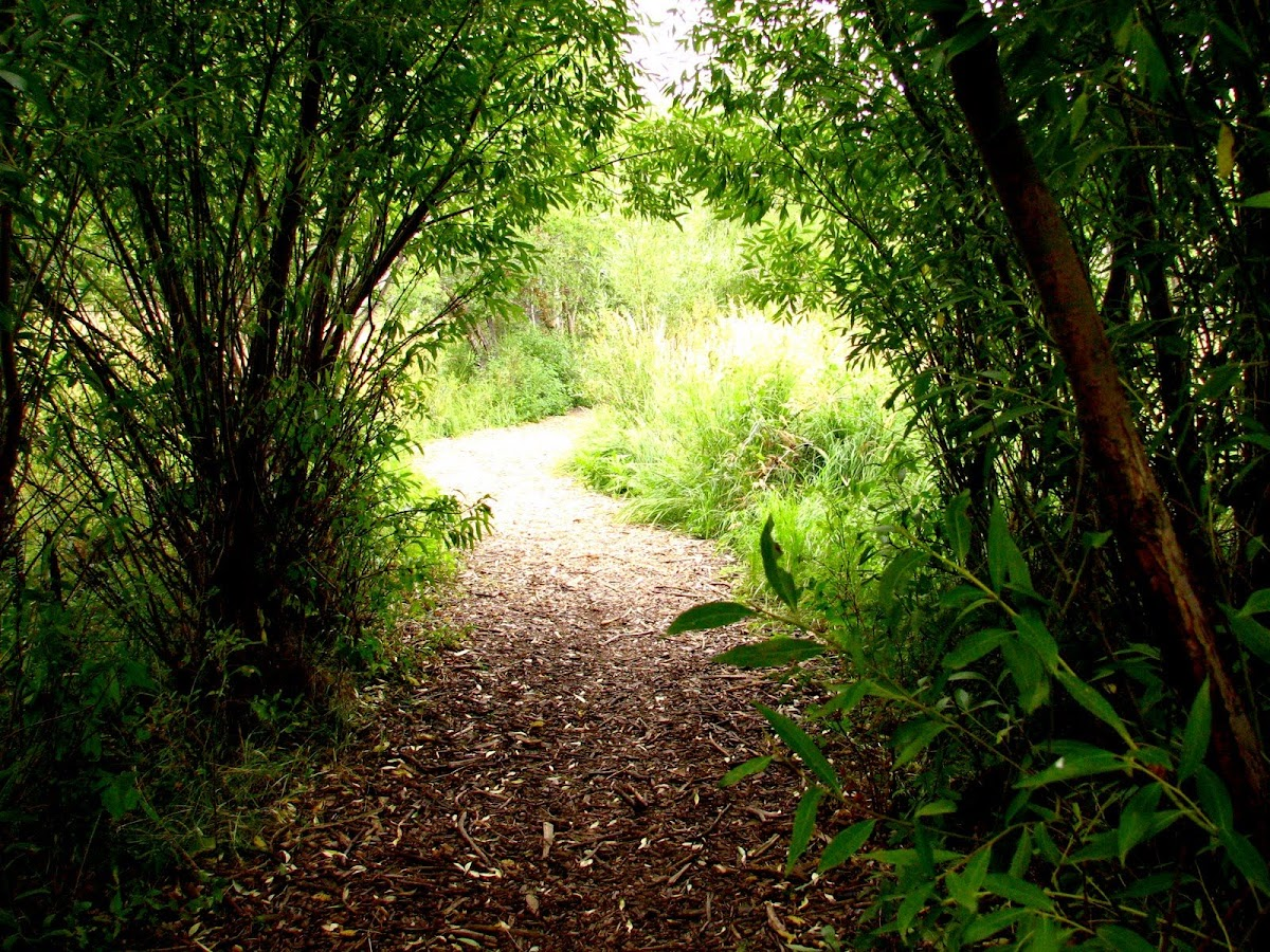 Foto: Beckoning path in Assinaboine Forest,Wpg.