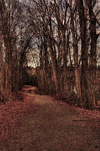 Photo: Take me home  A long cold journey for my #365Project curated by +Simon Kitcher and +Susan Porter
