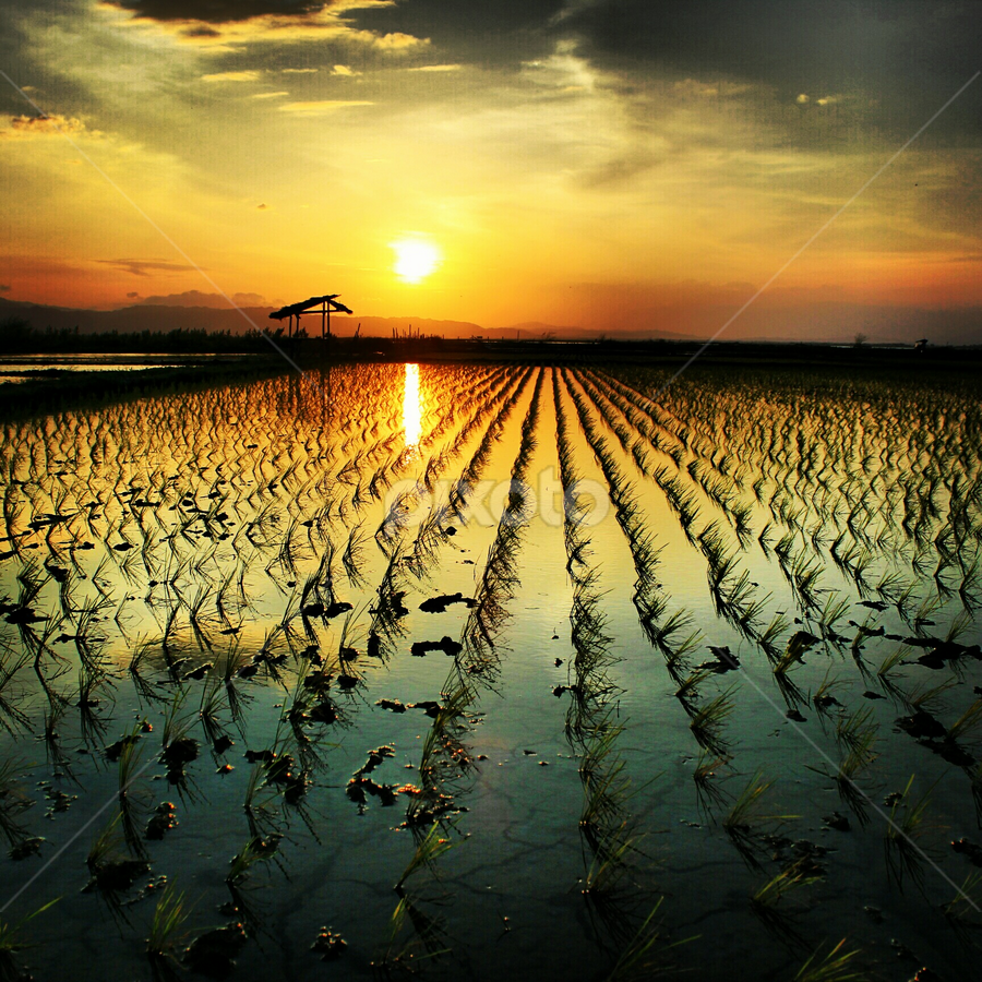 see u tomorrow by Ferdy Sarindat - Instagram & Mobile Android ( sawah, sunset, sun )