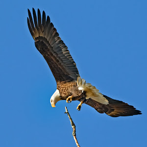 Dropping-a-Stick-in-Flight-G-31811.jpg