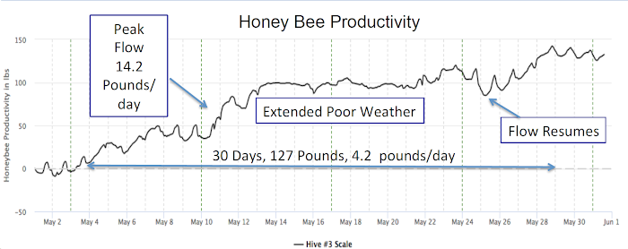 Honey Bee Productivity