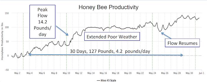 Honey Bee Productivity