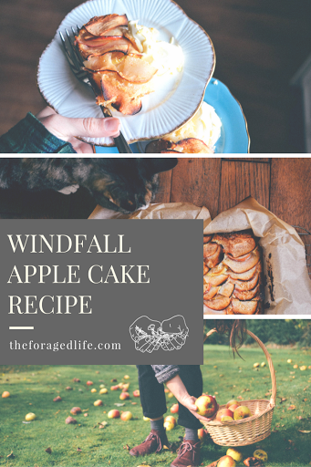 Autumn apple picking and Apple cake recipe - By The Foraged Life
